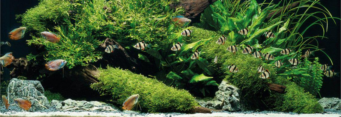 Japankoi Aquaristik